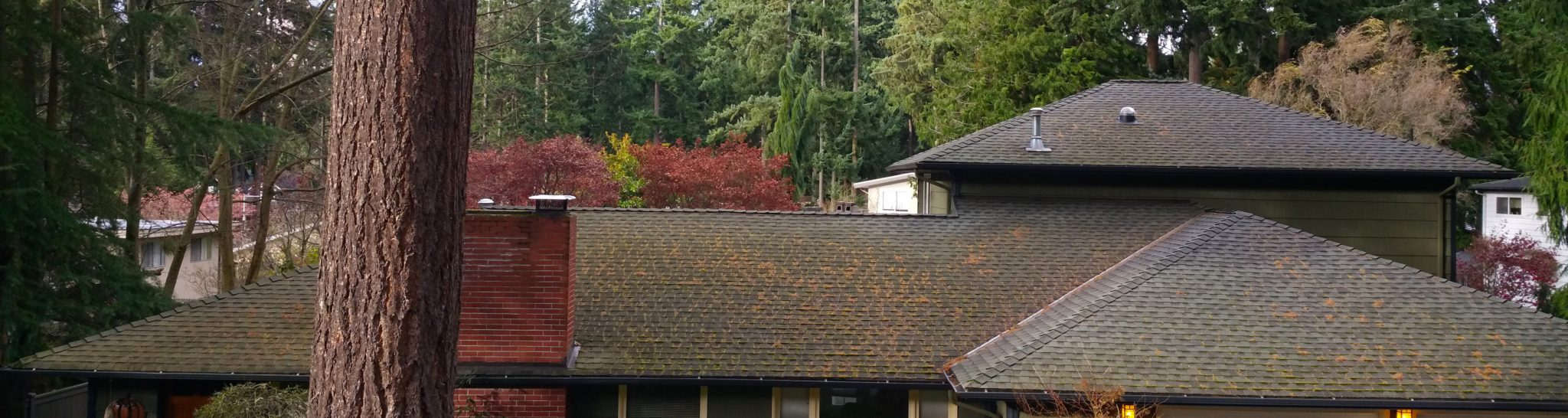 Roof Care Option B: The Basic Plus Brush. Brush Removal Of Moss ...