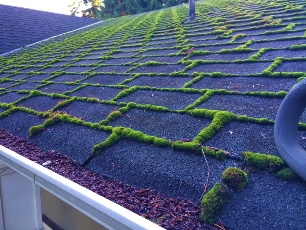 Roof Cleaning And Care Company Evergreen Window Cleaning
