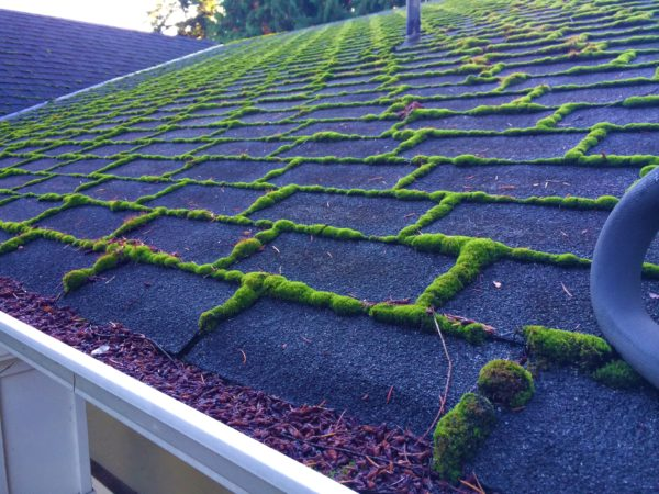 Best Danville In Roof Cleaning