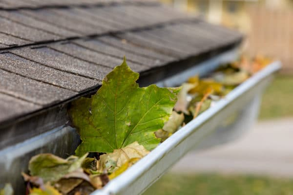 How Often to Clean Gutters