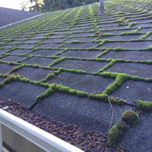 What You Need to Know About Roof Moss Removal