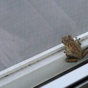 How To Clean Window Screens