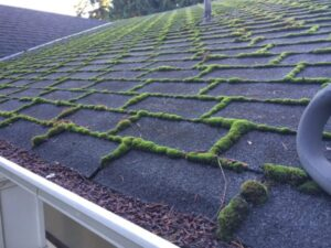 roof moss cleaners